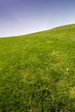 Blauer Himmel und Gras Stockbilder