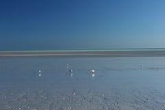 Blauer Himmel und Oberteil sprenkelten Strand bei dem achtzig-Meilen-Strand Stockbild