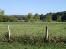 Blauer Himmel und Rasenfläche Lizenzfreies Stockfoto