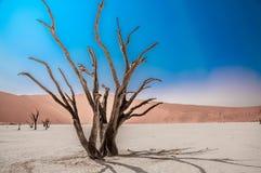 Blauer Himmel und roter Sand Lizenzfreie Stockfotos