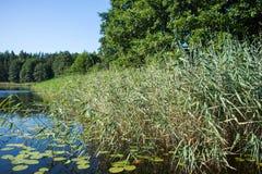 blauer Himmel und Wasser und grüner Wald und Schilfe am suuny Sommertag Stockbild