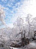 Blauer Himmel und weiße Bäume Stockbild