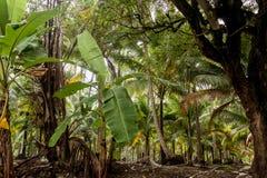 Blauer Himmel und weiße Wolken durch die grünen Palmen Lizenzfreie Stockfotos