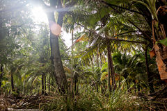 Blauer Himmel und weiße Wolken durch die grünen Palmen Lizenzfreies Stockfoto