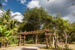 Blauer Himmel und weiße Wolken durch die grünen Palmen stockfoto