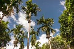 Blauer Himmel und weiße Wolken durch die grünen Palmen Stockbilder