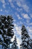 Blauer Himmel-und Winter-Fichten im Ural, Region Russlands, Tscheljabinsk, Minyar Pushkin-` s Fee tal stockbild