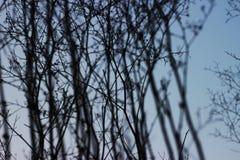 Blauer Himmel und zerbrechliche Zweige stockbild