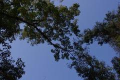 Blauer Himmel unter dem Baum Stockfotos