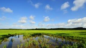 Blauer Himmel, weiße Wolken und grünes Feld stockbild