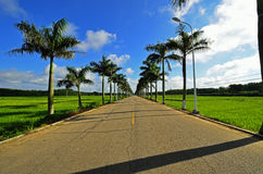 Blauer Himmel, weiße Wolken und grünes Feld stockfoto