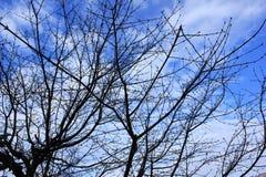 Blauer Himmel Weißwolken Stockfotos