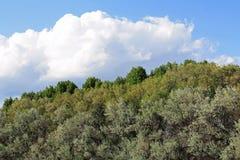 Blauer Himmel, Wolken, Bäume Lizenzfreies Stockfoto