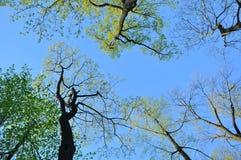 blauer Himmel, Wolken, Baum verzweigt sich, der Abstand, Frühling, Hoffnung, Hoffnung Stockfotos