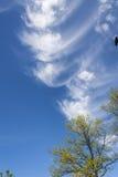 Blauer Himmel, Wolken und Bäume Stockfotografie