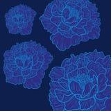 Blauer Hintergrund des Vektors mit schönen Pfingstrosen Stockfotografie