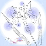 Blauer Hintergrund mit einer Iris lizenzfreie abbildung