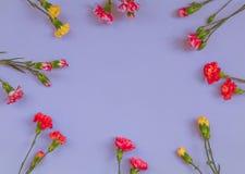 Blauer Hintergrund mit Gartennelkenblumen und Kopienraum Beschneidungspfad eingeschlossen stockfoto