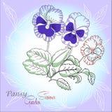 Blauer Hintergrund mit Pansies lizenzfreie abbildung