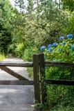 Blauer Hortensiebusch hinter einer Zaunvertikale lizenzfreie stockfotografie