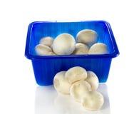 Blauer Kasten mit Pilzen Stockbild
