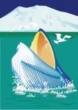 Blauer Kopf des Wals Lizenzfreies Stockbild
