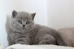 Blauer Mantel des kleinen Kätzchens stockfoto