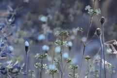 Blauer mit Blumenhintergrund  Nahaufnahme Weicher Fokus Lizenzfreie Stockfotos