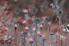 Blauer mit Blumenhintergrund Wildflowers auf einem bokeh Hintergrund Nahaufnahme Weicher Fokus Stockbilder