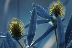 Blauer mit Blumenhintergrund Wildflowersgelbklee auf einem bokeh Hintergrund Nahaufnahme Weicher Fokus Stockfotografie