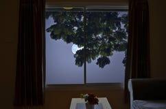 Blauer Mond mit Blättern in der Nacht Stockfotos