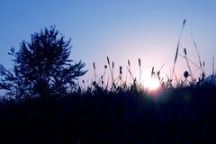 Blauer Morgen Stockfoto