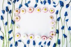 Blauer Muscari und rosa Blume Stockfotos