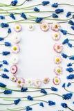Blauer Muscari und rosa Blume lokalisiert auf weißem Hintergrund Lizenzfreie Stockfotos