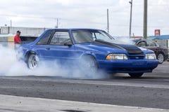 Blauer Mustang Lizenzfreie Stockfotos