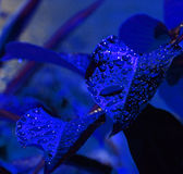 Blauer Nachtregen Stockbilder