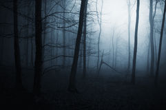 Blauer Nebel im furchtsamen dunklen Wald Lizenzfreie Stockfotografie