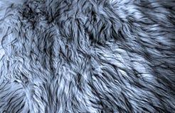 Blauer Pelz stockfotos