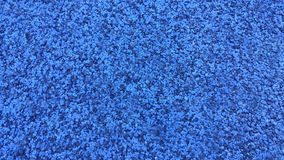 Blauer Rüttler Stockfoto