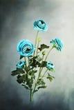 Blauer Ranunculus Stockbilder