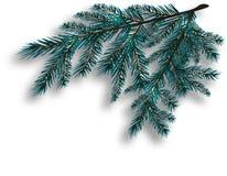 Blauer realistischer Baumast zwei Fichtenzweige gelegen in der Ecke Getrennt auf weißem Hintergrund Weihnachten Lizenzfreies Stockfoto