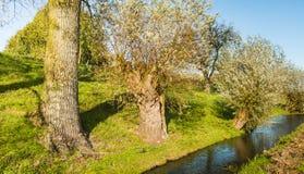 Blauer reflektierender Strom entlang einem Graben mit Bäumen Stockbild