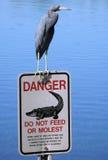 Blauer Reiher auf Florida-Zeichen Lizenzfreies Stockbild