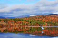 Blauer Reiher und Herbstfarben des weißen Berges und der Seen Stockbild