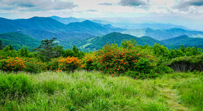 Blauer Ridge Appalachian Mountains North Carolina lizenzfreie stockbilder