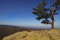 Blauer Ridge-Berge Vista vom Raben-Rastplatz Lizenzfreie Stockfotografie
