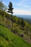 Blauer Ridge Mountains im Sommer Stockbild