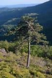 Blauer Ridge Mountains und Baum Lizenzfreies Stockfoto