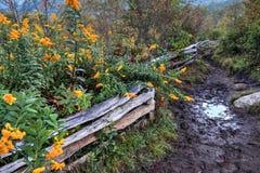 Blauer Ridge Parkway Trails stockbilder