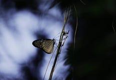 Blauer Schmetterling Lizenzfreies Stockfoto